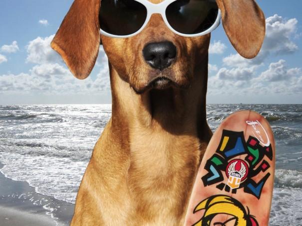 Perro_verano_vacaciones